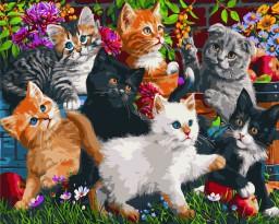 Sommer Katte