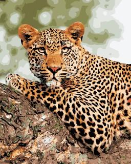Den Vilde Jaguar